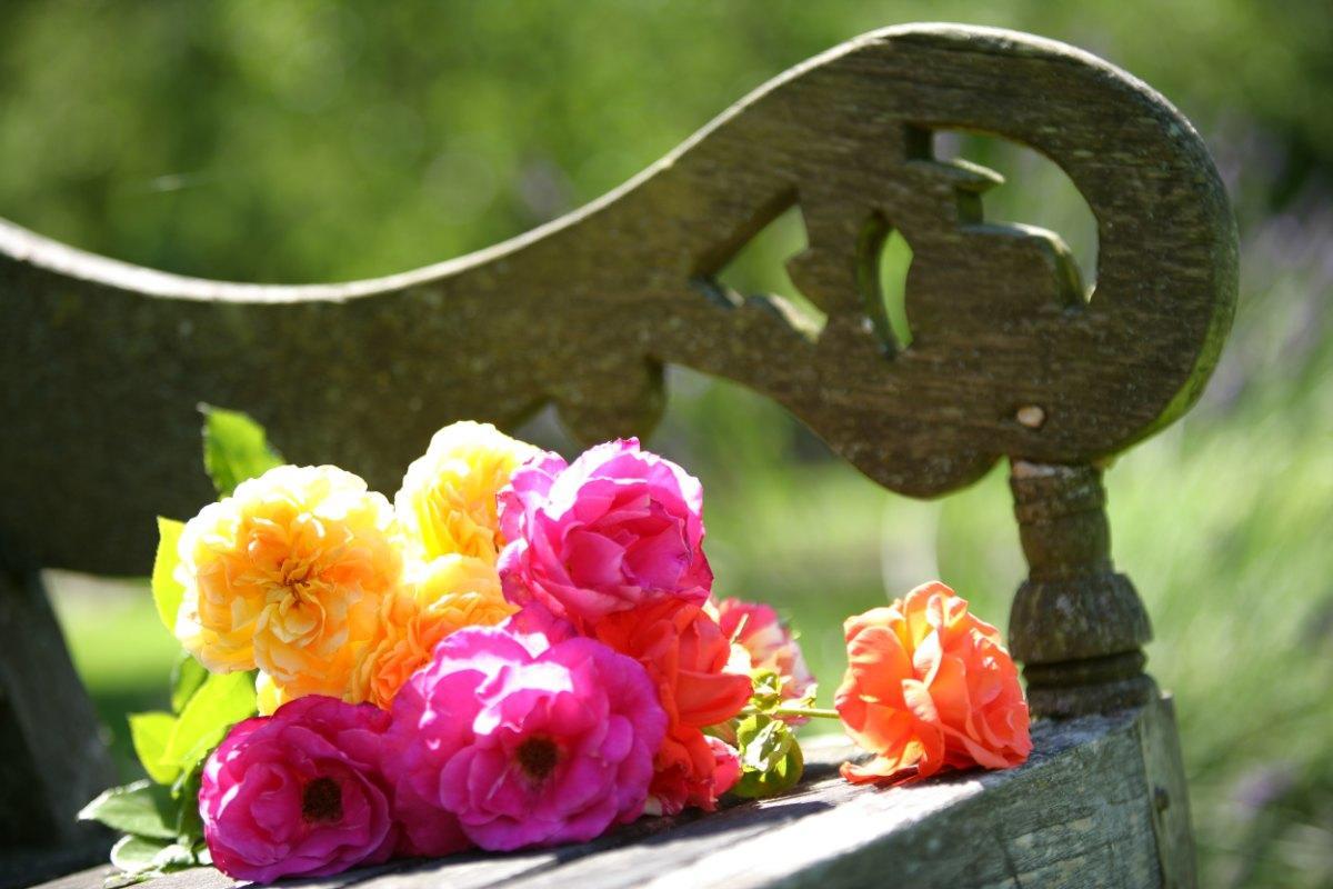 Flowers in Vaucelles Abbey - Les Rues des Vignes